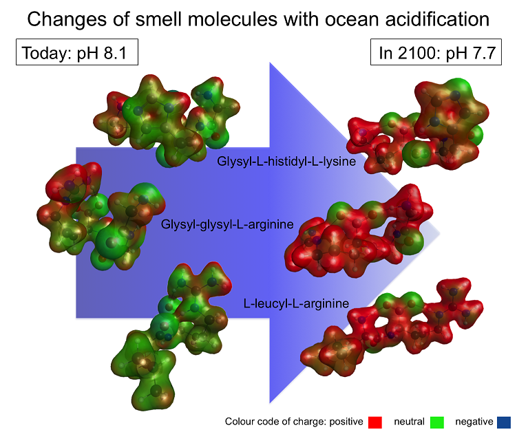Model conformers of three smell molecules in today's ocean pH and in future oceanic pH conditions